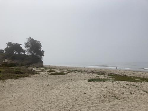 Wide Beach with light fog and vegetation